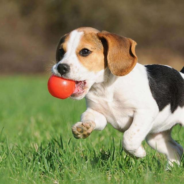 Какие игрушки купить щенку